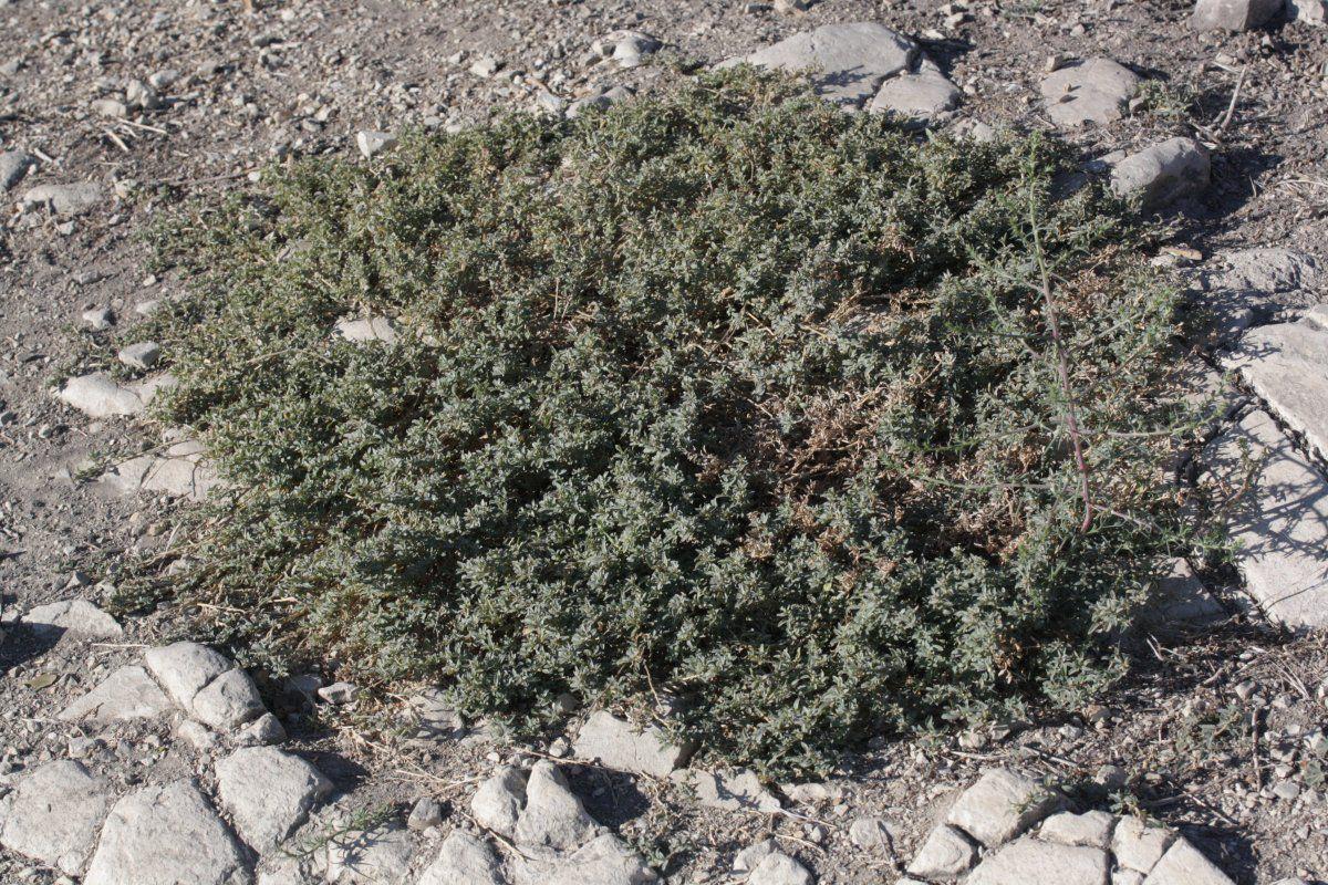 australian native plant guide app