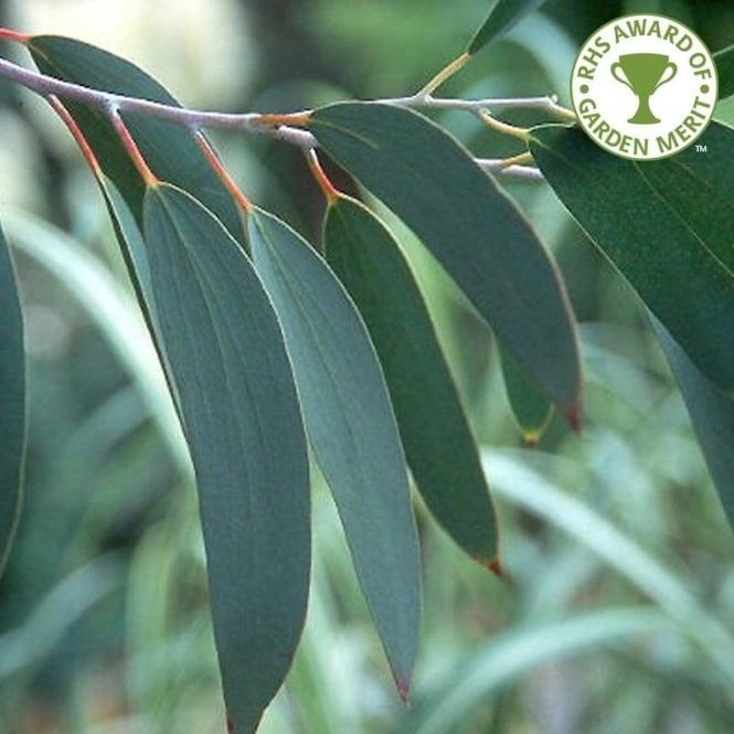 perth western australia year round planting guide