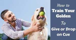 what do i need to be a guide dog trainer