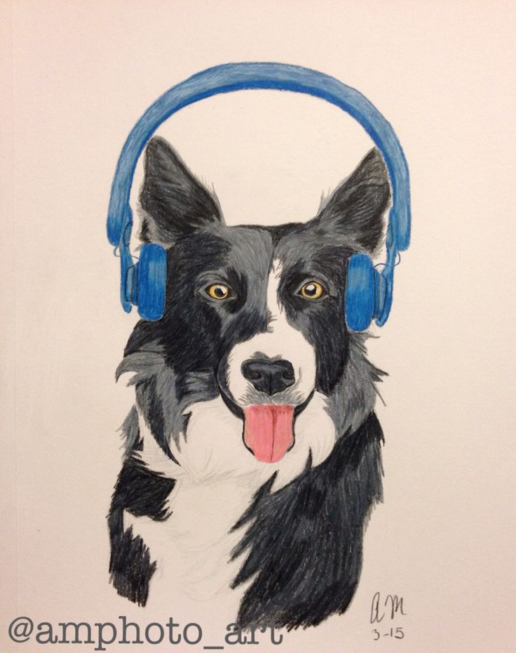 the complete border collie guide alice singer
