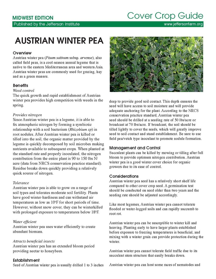 austrian winter peas planting guide
