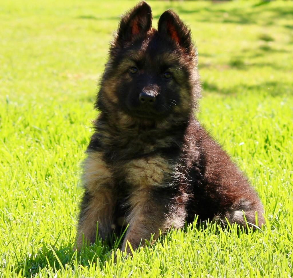 puppy guide vaccinations worming desex