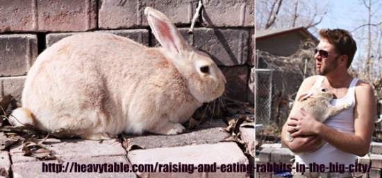 stories guide to raising rabbits