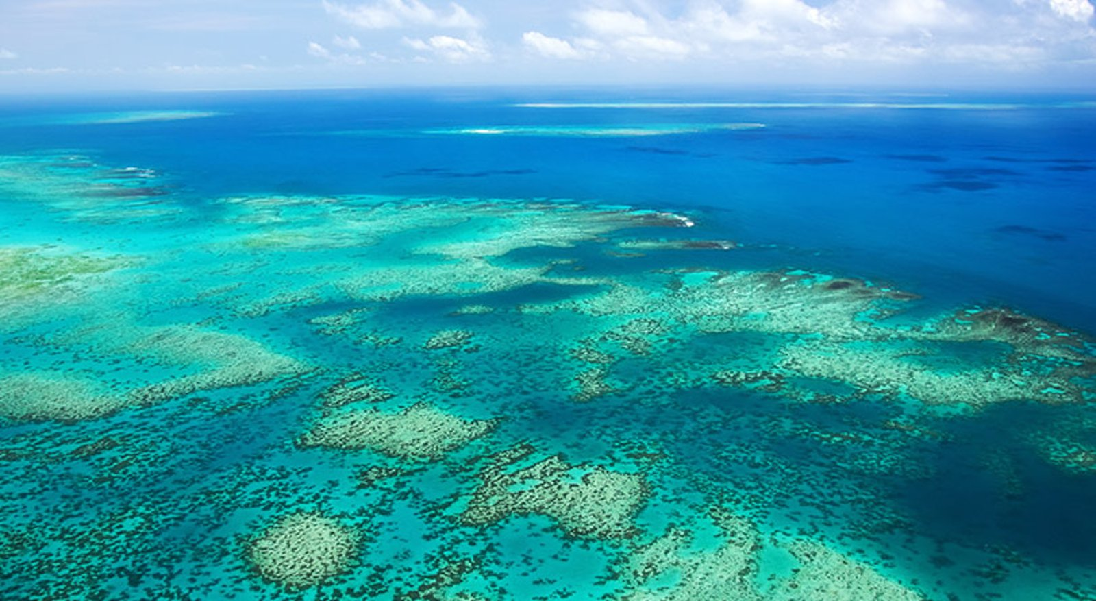 sydney to cairns guided tours