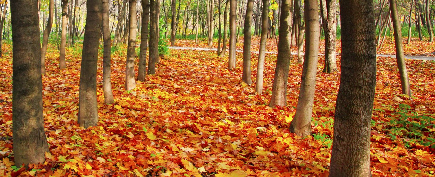 the ultimate guide to autumn foliage in seoul